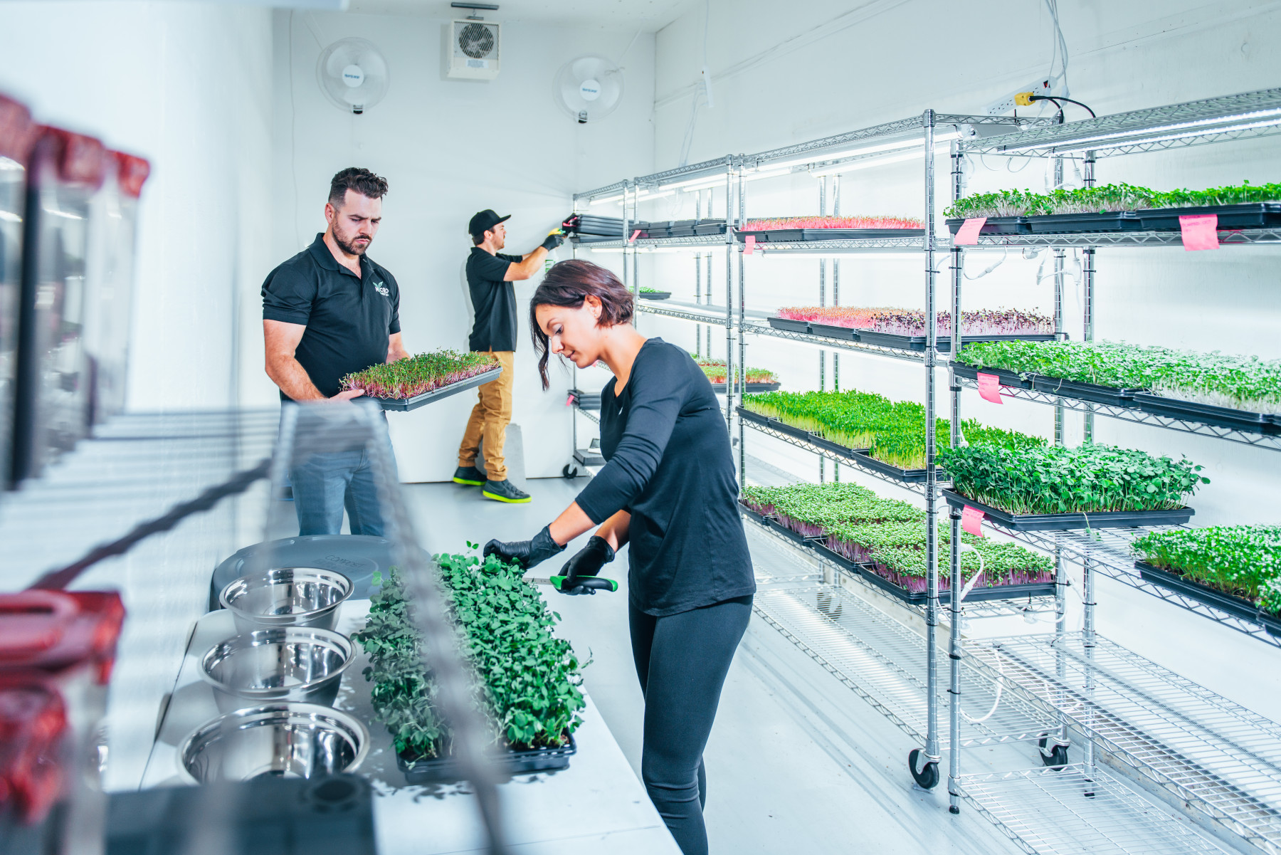 Growers working in microgreen grow facility